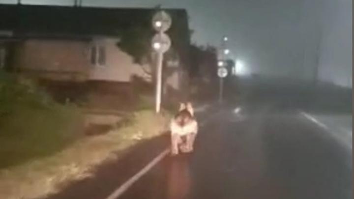 Жители Южно-Курильска гонялись за медведем по улицам на машине
