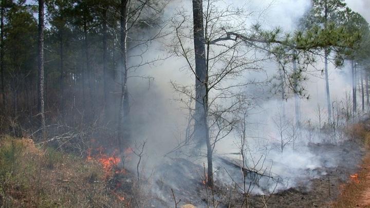 На территории Карелии горит более 15 тысяч га леса