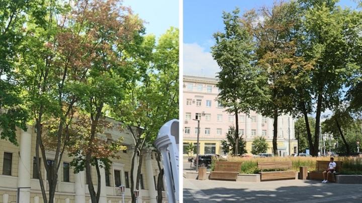Трагедия Воронежа: в Пушкинском сквере засохли деревья