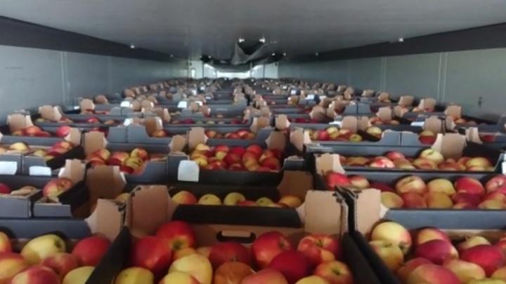 Под видом чешского пива через Смоленщину пытались провезти польские яблоки