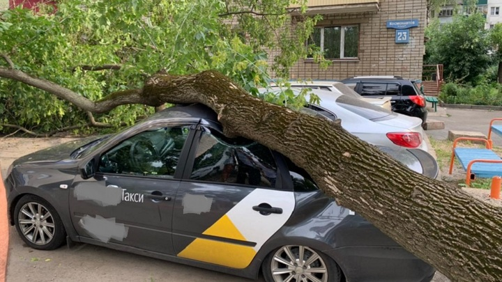 """""""Старый клен стучит в стекло"""": в Липецке дерево упало на четыре автомобиля"""