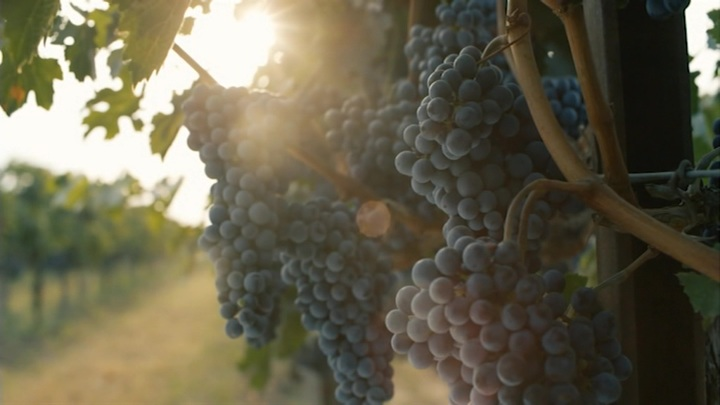 Виноделие Крыма: на стыке истории и новых технологий