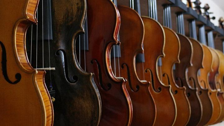 Уникальное звучание скрипкам Страдивари обеспечивает особый способ обработки древесины от червей.