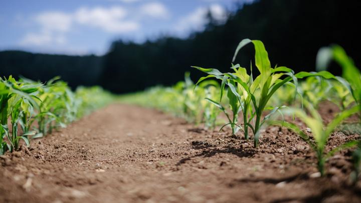 Пестициды используются для борьбы с вредителями и болезнями растений, однако могут навредить также и здоровью человека.