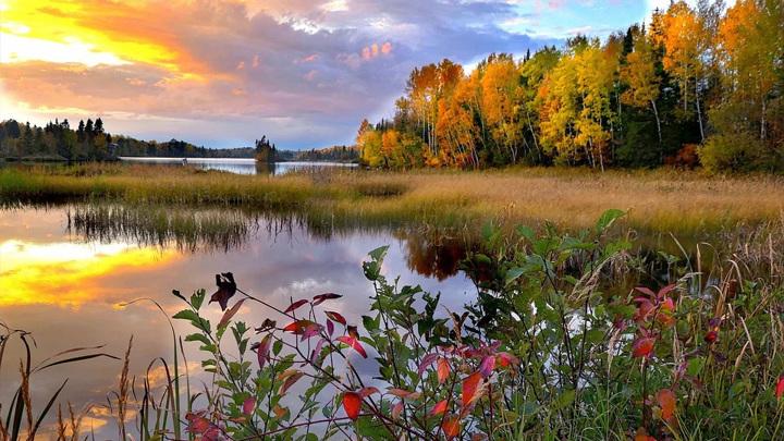 Осень в цвете: как правильно фотографировать в