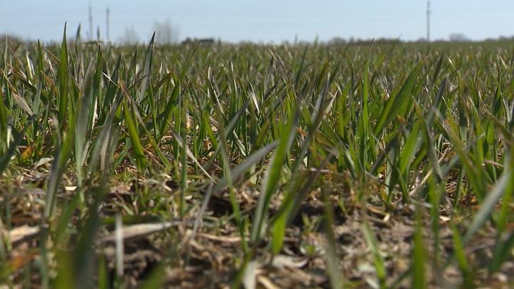 Калининградские аграрии дополнительно получат 100 млн рублей
