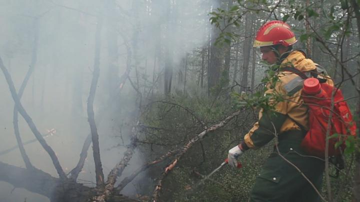 В регионах РФ за сутки ликвидировали лесные пожары на площади более 12,5 тыс. га