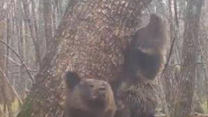"""""""Косолапое буги-вуги"""": пара танцующих медведей стала звездами соцсетей"""