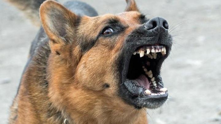 У собаки, которая загрызла свою хозяйку, выявили бешенство