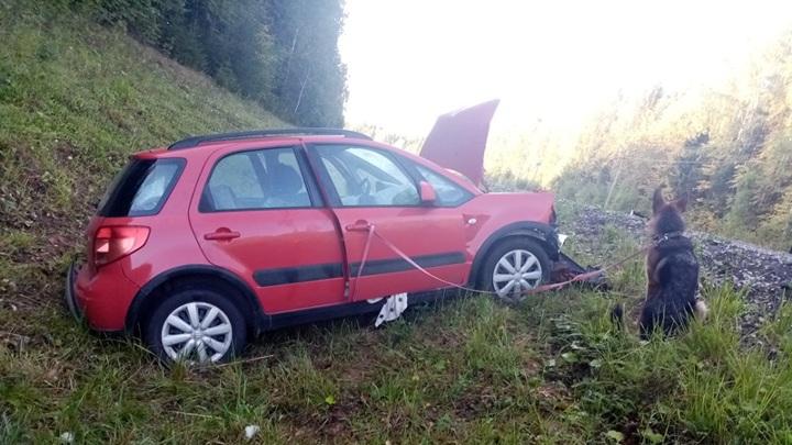 Трое москвичей попали в аварию по вине овчарки