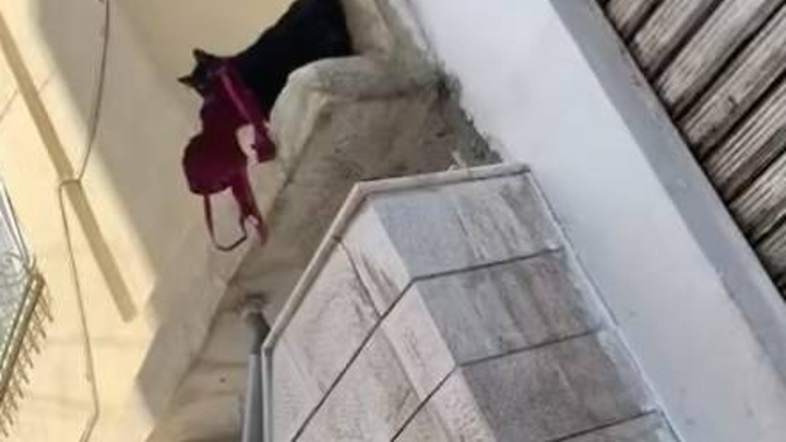 Добыча 18+: кот-фетишист похитил чужой бюстгальтер