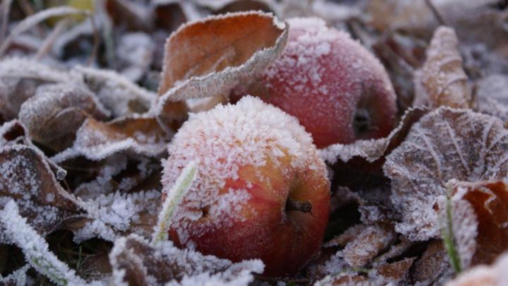 Ночные заморозки прогнозируют в Костроме синоптики