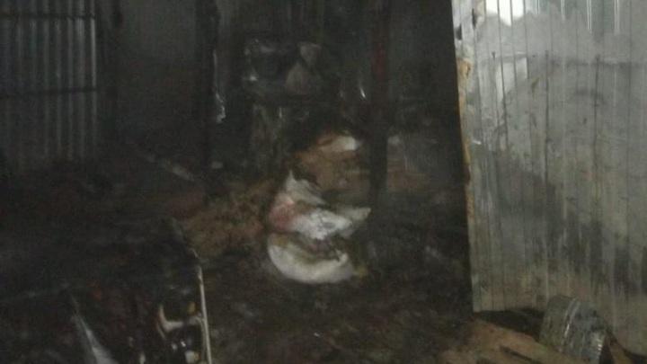 130 собак спасли из горящего приюта в Татарстане