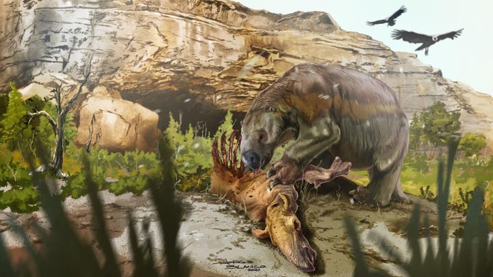 Художественная реконструкция того, как милодон питается мясом макраухении. Оба животных вымерли около 11 000 лет назад.