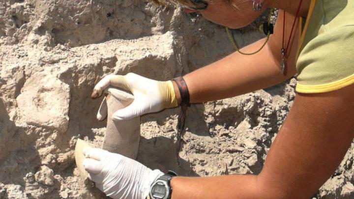 Новороссийские археологи обнаружили ранее неизвестное древнее поселение