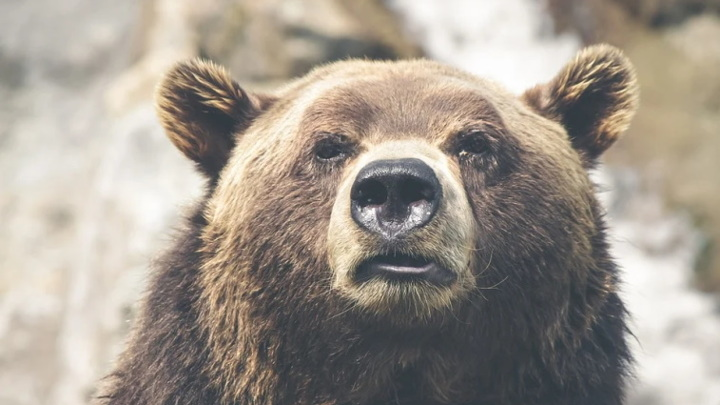 В пригороде Магадана медведь напал на человека