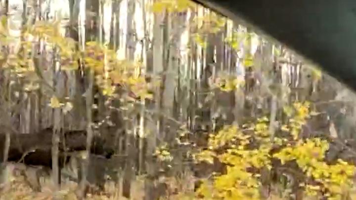 Рядом с больницей в Казани очевидцы сняли на видео лося