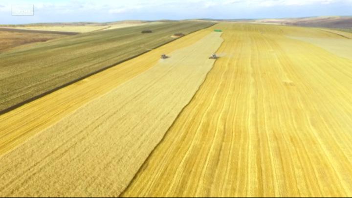 В Иркутской области подсчитали собранный урожай