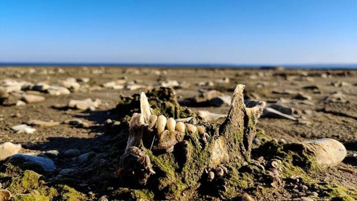 Пляж на костях: появились новые фото с побережья в Самарской области