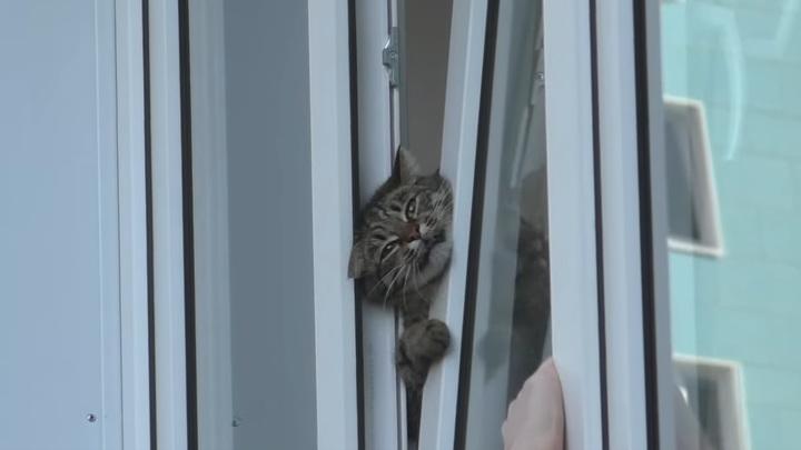 Прохожие спасли застрявшего кота в Омске. Видео