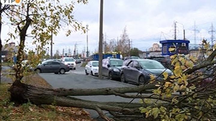 В Петербурге почти устранили последствия урагана