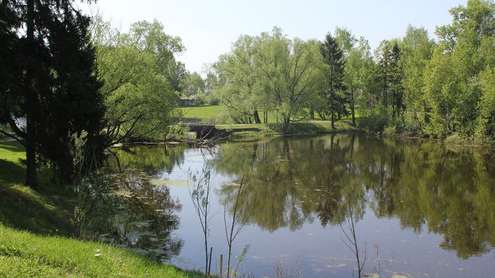 "Усадебный пруд вокруг Захарово. Пушкин:  ""Оно зерцалом вод окружено…"""