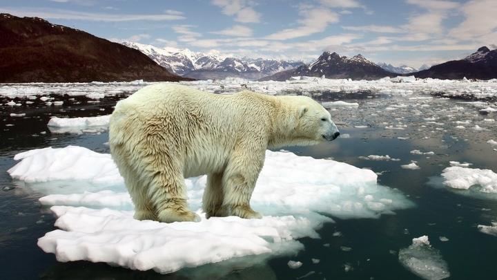 Всемирный фонд дикой природы просит Минприроды издать приказ о соблюдении правил безопасности в Арктике