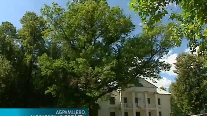 Специалисты укрепляют крону дуба-долгожителя в Абрамцеве